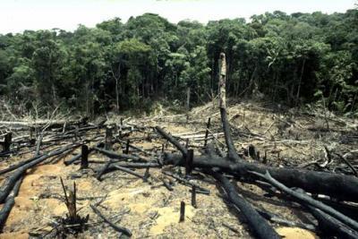 Aumenta nuevamente deforestación en Amazonas: científico